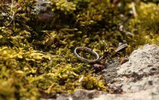Kassinurme sõrmus